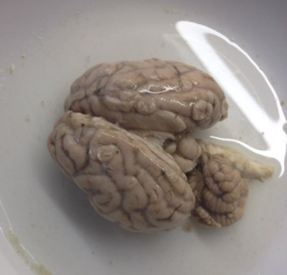 Sheep's Brain